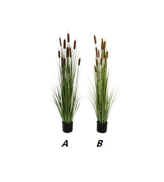 Planta Junco 150 cm