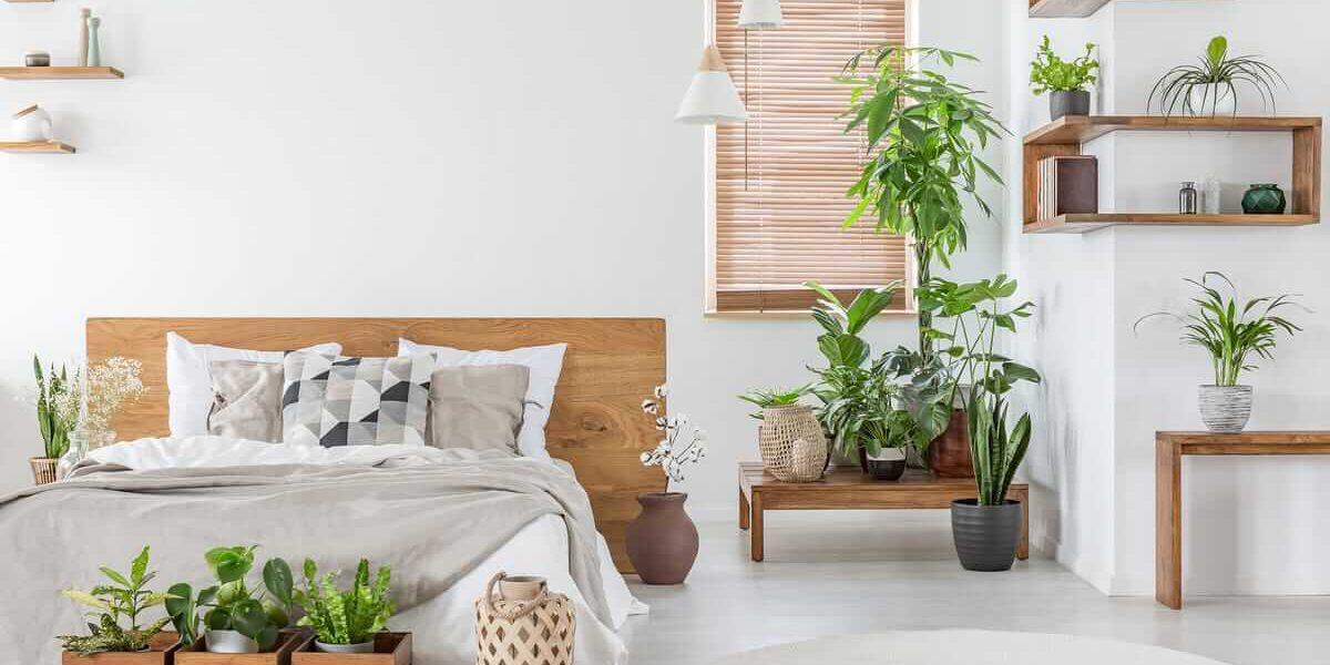 bigstock-decoracion-plantas-interior